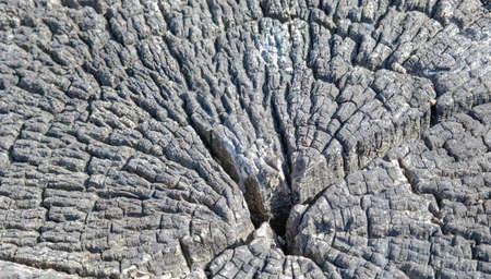 duramen: árbol duramen es más antiguo