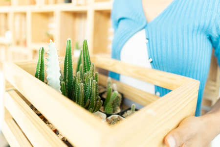 Home gardening with cactus plants