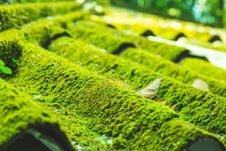 The house is in a forest and there is a moss on the roof. Stok Fotoğraf