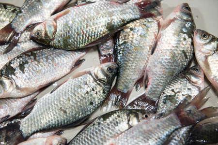 crucian: Fish crucian