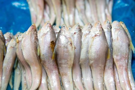 karausche: Fisch Karausche Lizenzfreie Bilder