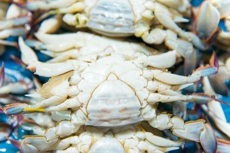 blue swimmer crab: swimming crab in market Stock Photo