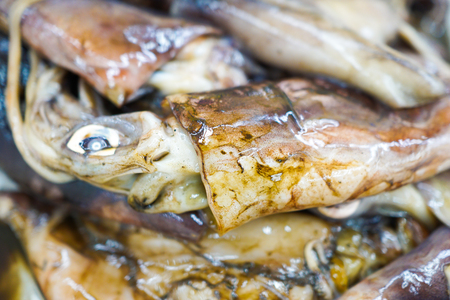 acetabulum: fresh octopus in the market Stock Photo