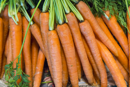 Fresh garden carrots Stock Photo