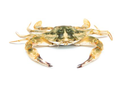 crab isolated on white background Stockfoto