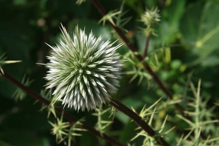 pokey: A spiky plant appears protected from predators.