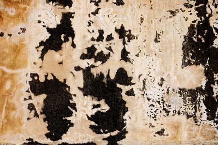 black mold: The Black mold on the wall , made the strange looking.