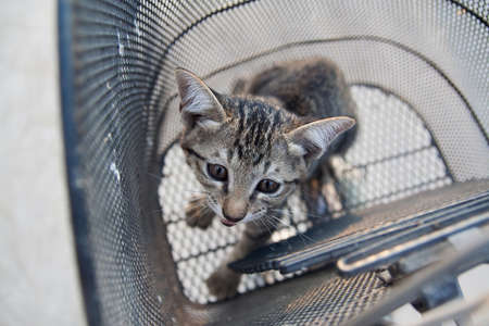 pussycat: A pussycat standing in the basket. Stock Photo