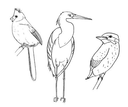 Set of birds. Sketch.