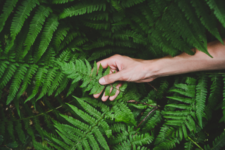 hand holds a fern leaf, background Stock Photo