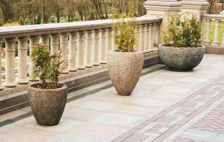 hemispherical: three thujas in concrete pots,summer garden decoration Stock Photo