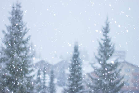 heavy snow: blurred heavy snow falling on background of fir-trees