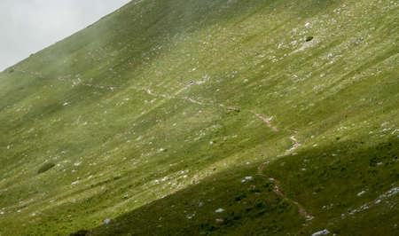 슬로베니아에서 산 경로 그린 필드 언덕