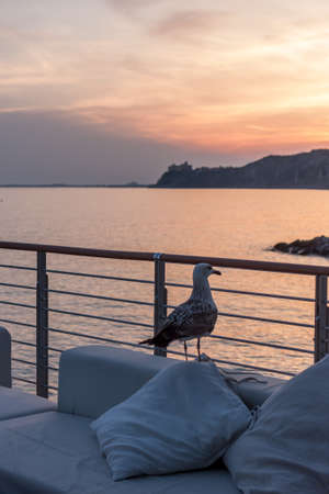 seagull on terrace watching sunset
