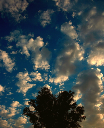 unusual: Unusual evening clouds above a tree. Unusual evening clouds above the tree.