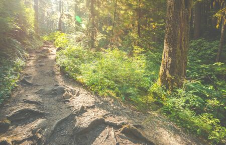 scenic view of path way in the forest with sun light. 免版税图像