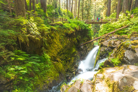 sol duc: scenic view of  Sol duc  water falls area  in mt Olympic National park,Washington,usa.