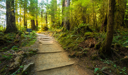footpath: scenic view of path way in the forest with sun light. Stock Photo