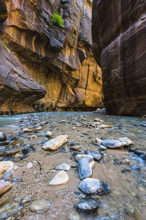 zion narrow  with  vergin river in Zion National park,Utah,usa.