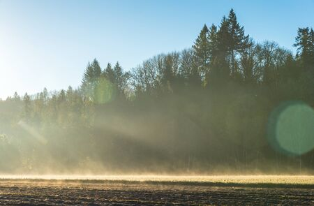 Young pine tree seedling garden landscape in the morning light with fog.