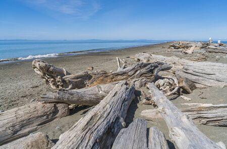Dungeness national wildlife refuge,Washington,usa.