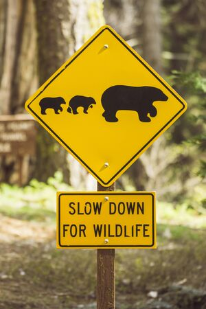 bear sign on the road in national park. Banque d'images