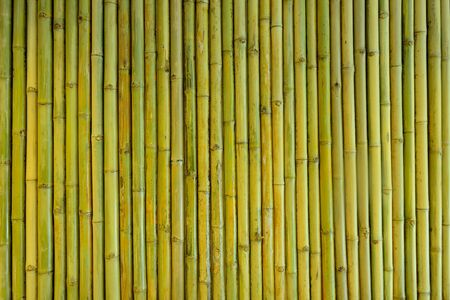 Yellow-Green Bamboo fence background