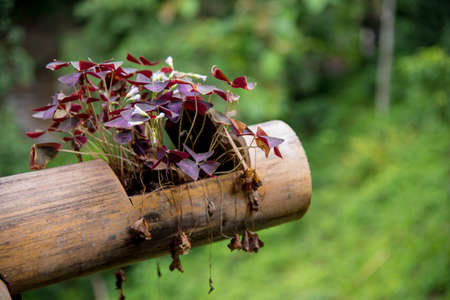 A purple flower in bamboo pot with dry flower in the air