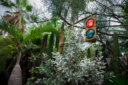 A concept of traffic light in the forest.