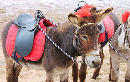 ass fun: seaside donkeys