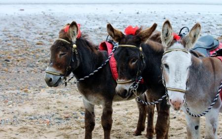 burros mar Foto de archivo - 24383669