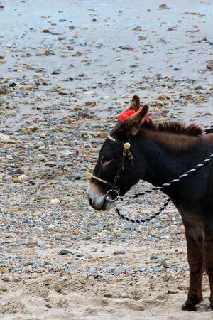 seaside donkey photo