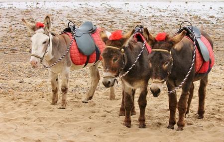 seaside donkey ride English beach photo
