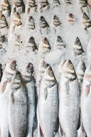visboer: Vissen bij vishandel in rij, rij van forel in de rij bij visboer op ijs verpletterd