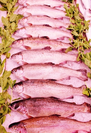 fishmonger: row of trout in line at fishmonger on ice crushed