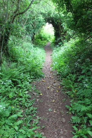tunnel path covered with trees and bushes