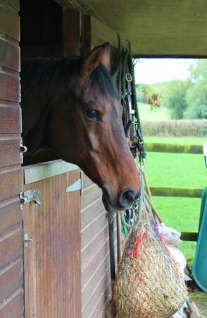 horse looking over stable door photo