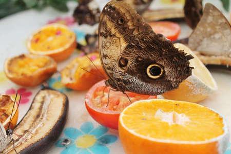 snake-eye butterfly on fruit photo
