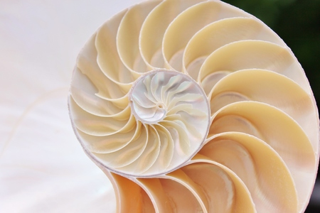 nautilus shell cross section spiral  Stock Photo