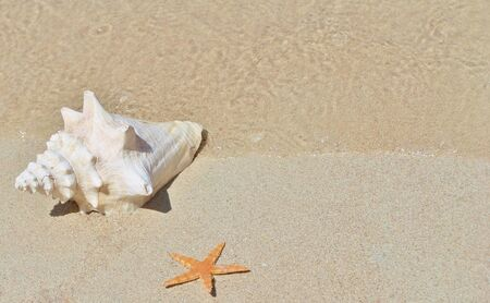 conch and starfish on sandy beach photo