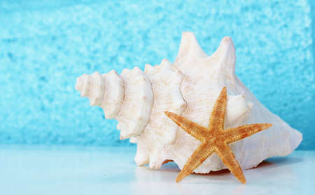 conch shell and starfish summer background photo