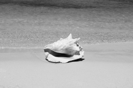 Conch shell on sand beach with sea waves photo