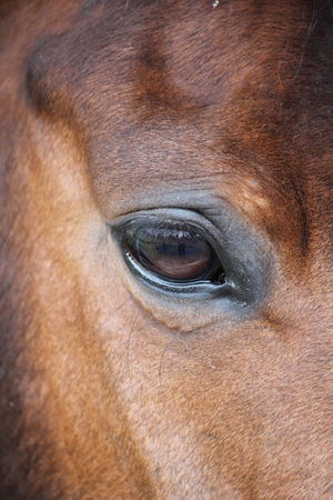 close up of a horses head eye with reflection of me and the yard on eye photo