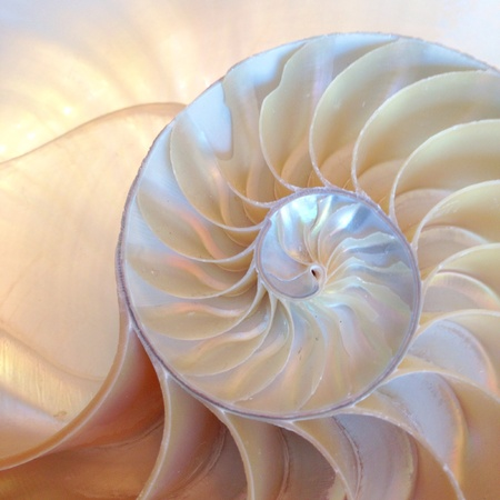 Nautilus shell half section swirl backlit fullscreen Stock Photo