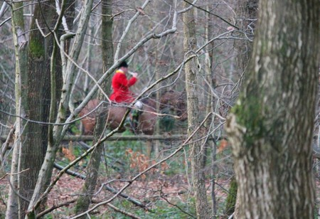 fox hunt rider just visable through forest trees