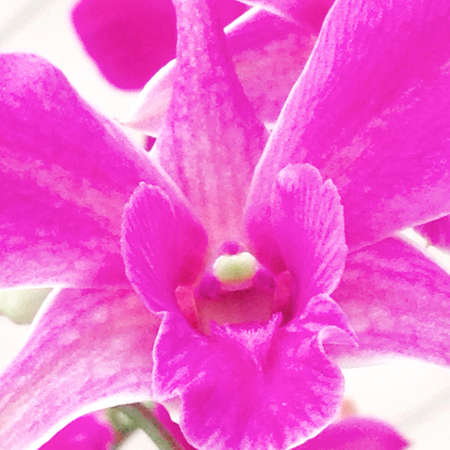 bright: Bright  pink orchid Stock Photo