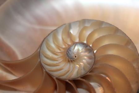 fibonacci pattern in cross section nautilus shell mollusk sea shell Stock Photo