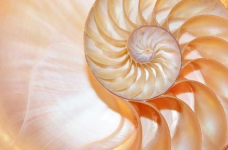 노틸러스 쉘 피보나치 대칭 단면적 나선 구조 성장율 황금 비율 스톡 콘텐츠