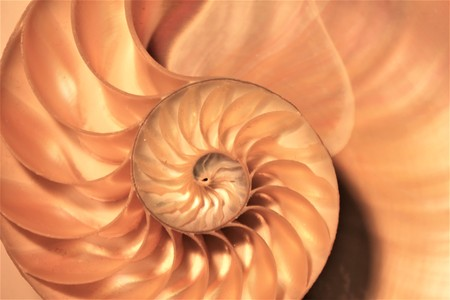 nautilus shell Fibonacci symmetry cross section spiral structure growth golden ratio