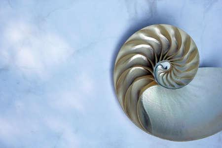 Nautilus shell Fibonacci symmetry cross section spiral structure growth golden ratio concrete rock stone